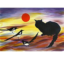 The Magpies tell Meow of Red Photographic Print