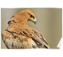 Tawny Eagle - Majestic - African Wild Bird Background Poster