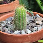 My little green cactus by Maree  Clarkson