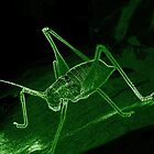 Neon-Edged Cricket - Green by Andy Turp