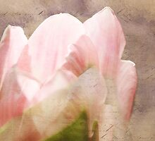 Dreaming of a Pink Tulip  by MaureenAstrid