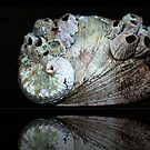 Barnacles on a Seashell  by myraj