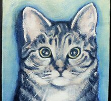 Stormy the cat by kathy archbold