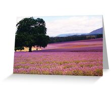 Lavender Farm Greeting Card