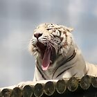 *YAWN* by Vicki Spindler (VHS Photography)