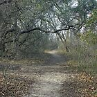 Nature Trail by Vivian Sturdivant
