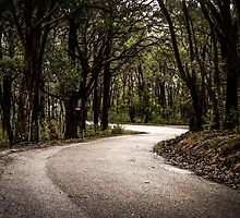 Saddle Hill Road, Belair National Park, SA by Emily Wilson