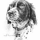 Brittany spaniel pen & ink drawing by Mike Theuer