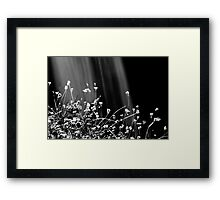 Waterfalls & Wildflowers Framed Print