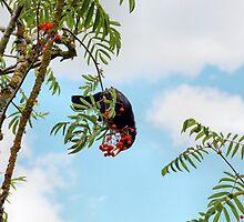 Tasty berries - image 1 of series 1 by missmoneypenny