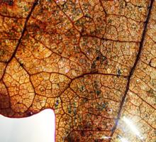 Light thorugh Leaf Sticker