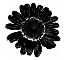 Black flower by Sansiona