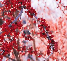 Red Berries by Vintagee