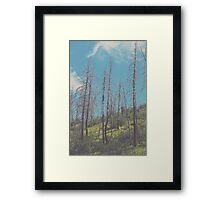 South Prong Trail Framed Print