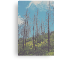 South Prong Trail Canvas Print