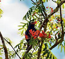 Tasty berries - image 1 of series 2 by missmoneypenny