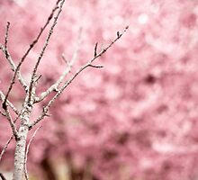 Pink Branches by Vintagee