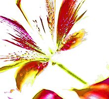 Daylily Abstract by Gilda Axelrod
