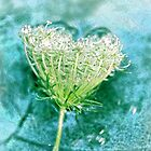 Queen Anne's Lace by Rosemary Sobiera