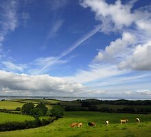Rolling Hills of County Down by Stephen Maxwell