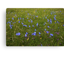 A sea of Harebells, Rossbeg, Co Donegal Canvas Print