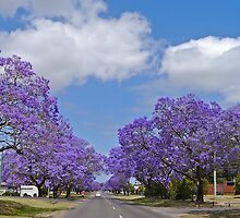 Jacaranda Blue, Grafton, NSW. by Margaret  Hyde