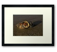 Hermit Crab on Fahan Beach Framed Print