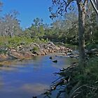 Crows Nest Creek, Crows Nest National Park by Margaret  Hyde