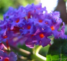 The butterfly bush beckons by MarianBendeth