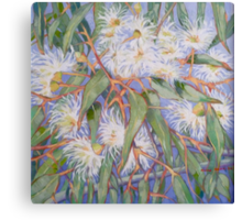 White gum blossom outside our window 2012Ⓒ. Oil on canvas Canvas Print