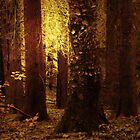 TOUCH OF GOLD IN THE FOREST by leonie7