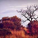 A tree in the Scrub by myraj