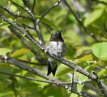 Hummingbird In Tree by Martha Medford