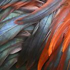 Feathers by Marilyn Harris