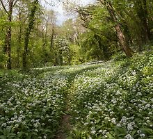 Path through the Wild Garlic by David Tinsley
