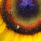 Sunflower, Seeds & Bees by Laurie Minor