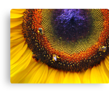 Sunflower, Seeds & Bees Canvas Print