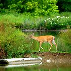 Deer on the Lake by Mechelep
