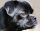 """""""Pug Mug ~ In Profile"""" by Laurie Minor"""