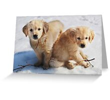 Golden Retriever Puppies First Winter #3 Greeting Card