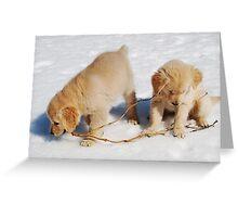 Golden Retriever Puppies First Winter #2 Greeting Card