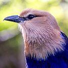 718 Blue by pcfyi