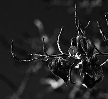 Aspen Leaves In B and W by Gary Benson