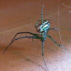 Flowerpot Spider by elasita