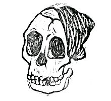Tuang skull by Cameron Holland
