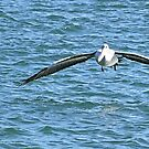 COMING IN TO LAND by Margaret Stevens
