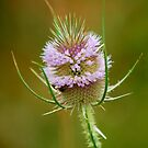 Thistle by Mechelep
