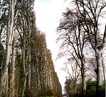 World's Tallest & Longest Hedge. by Margaret  Hyde