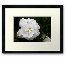 Romantic Night ~ Scent of Gardenias Framed Print