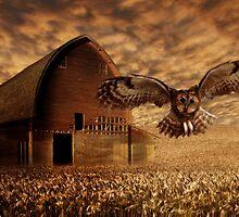 Barn Owl by Cliff Vestergaard